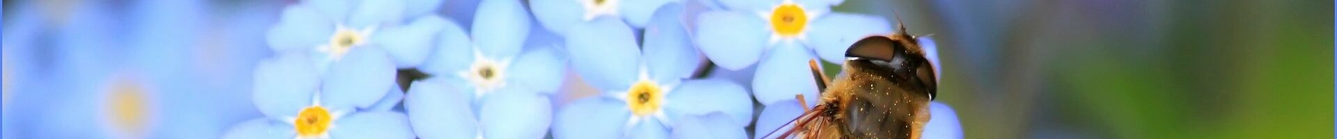LandFrauen Weisweil -Bild mit Blüte und Biene